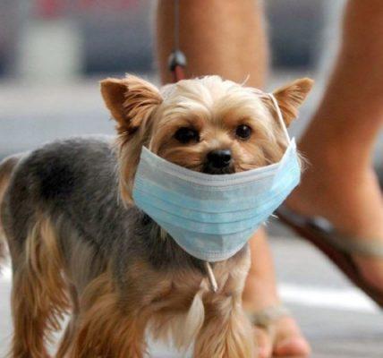 """5 tips para cuidar a tu perro en la """"Nueva normalidad"""""""