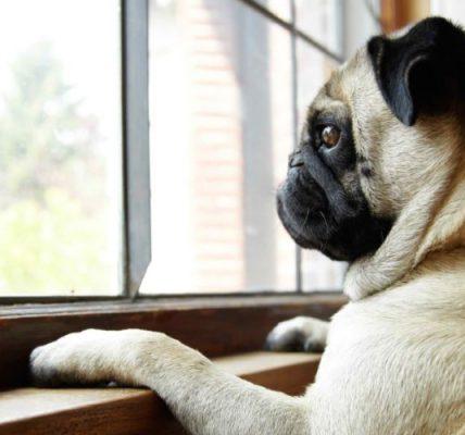 8 tips para reducir la ansiedad de tu perro cuando te vas