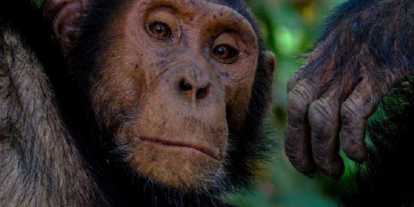 Los animales que tienen riesgo de padecer Covid-19